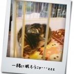 【猫動画】言わんこっちゃないニャン!