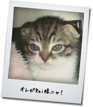【猫動画】「ザ・猫じゃらし」