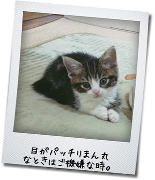 【猫動画】猫じゃらしの正しい攻略法を考えついた!
