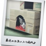 【猫動画】ヤギミルクを初めて飲んだよ!ヤギミルクレビュー