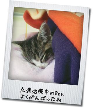 京都市から行ける夜間救急動物病院