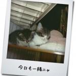 【猫動画】「はらたつにゃーー」