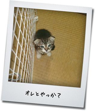 【猫動画】猫プロレス~失礼な解説者たち~」